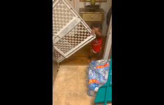 One-Year-Old Baby Sneaks to the Kitchen Even with a Safety Gate [Viral Video]