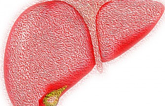 Liver Cells Grow in Pig Lymph Nodes, Study Proves [Humans Soon to Undergo Clinical Trials]