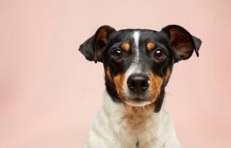veteran's dog, reunited, deported