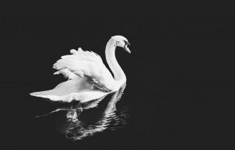 little girl, distressed swan, veterinarian
