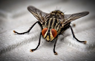 how to get rid of fruit flies, easy and effective