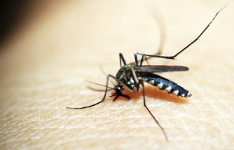 How to Prevent Mosquito Bites: Four Easy Steps That Parents Could Follow
