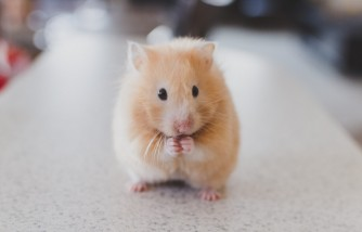 how to get rid of mice, ways to eliminate them