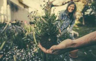 How To Maintain Gardens - Some Helpful Tips