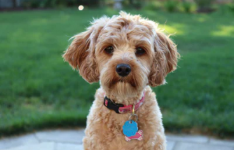 6 Dog Breeds That Are Perfect For Kids