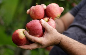 Massachusetts Farm Apologizes to a Black Family Accused of Stealing Apples
