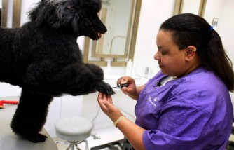 Tony Pet Hotel Caters To Pampered Pooches