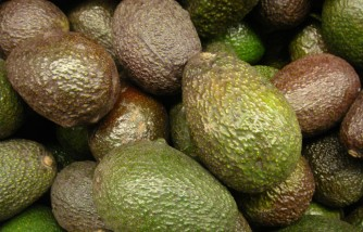 Avocados May Prevent Several Types of Diseases, Aid in Weight Loss