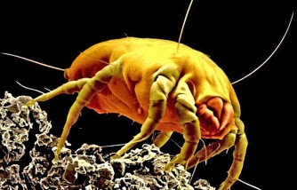 Dust mite allergies squandered with mattress covers? Study says maybe not