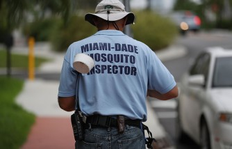 Miami Beach Mosquitoes Test Positive For Zika Virus