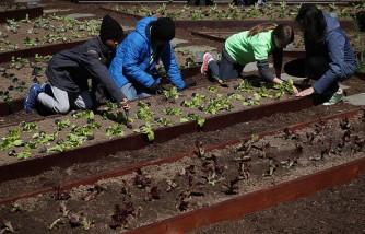 Michelle Obama Joins Students To Plant White House Kitchen Garden