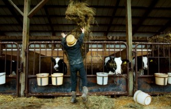 Why Asthma Is Rare In Amish Children