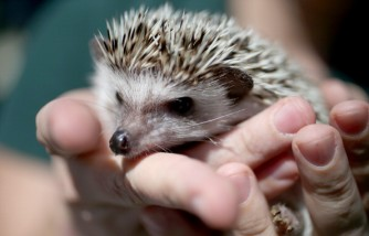 Florida Officials Hold Exotic Pet Amnesty Opportunity