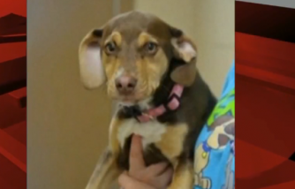 Formerly Abused Dog