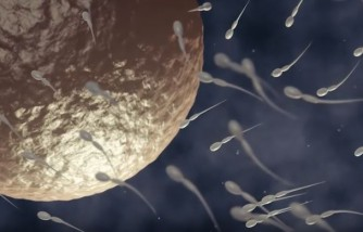 Male Fertility Solutions: Sperm-Checking Kits Now Available For Private Use