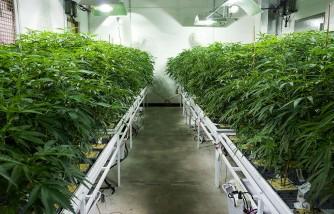 Florida Dad Grew Marijuana At Home